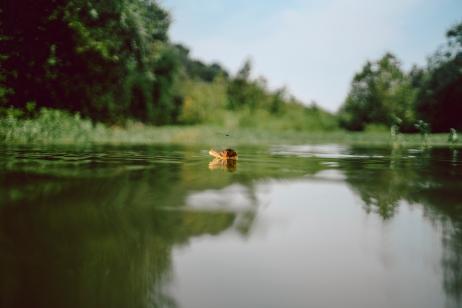 Lost Creek 8-15-013