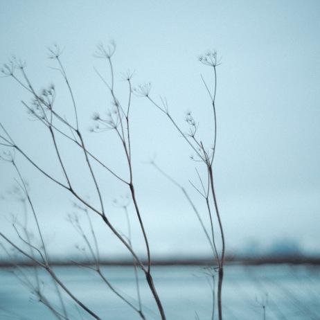 Iceland Web-044
