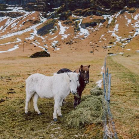 Iceland Web-061