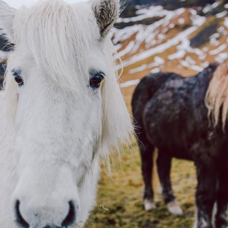 Iceland Web-064