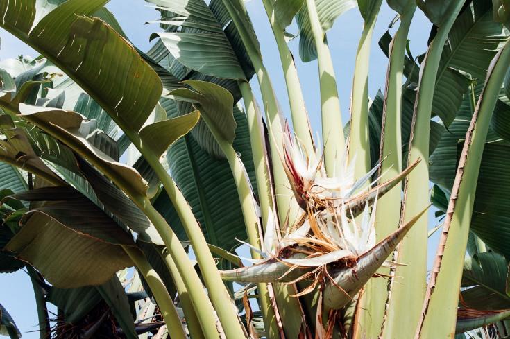 Baja Mexico 2017-0095
