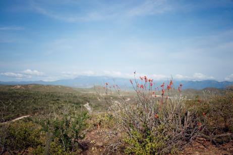 Baja Mexico 2017-0102