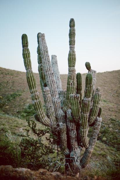 Baja Mexico 2017-0121